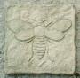 Moth SS